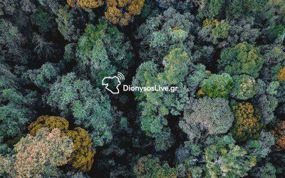 Δασικοί χάρτες και Αντιπυρική προστασία στο Δήμο Διονύσου